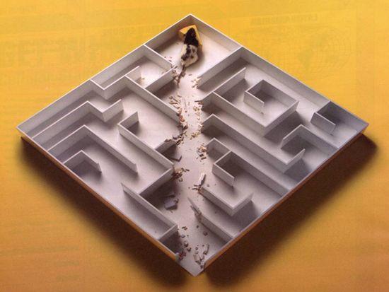 Une souris dans un labyrinthe