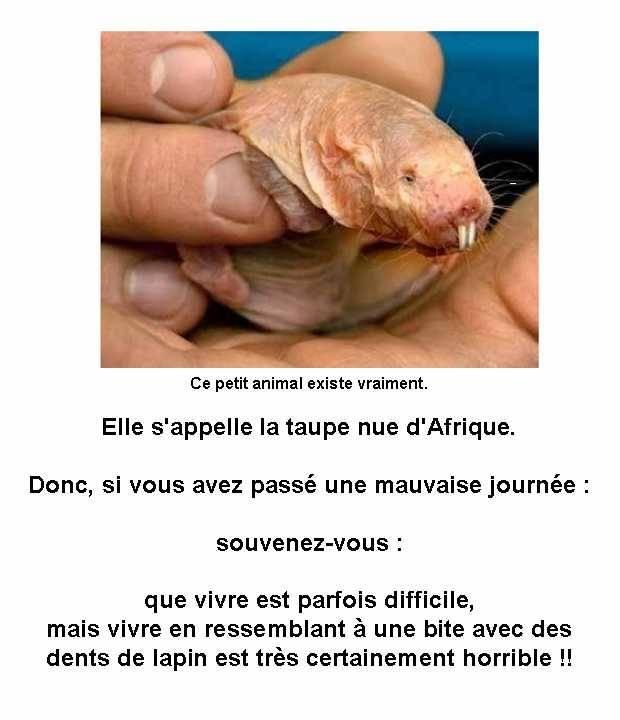 Top Taupe nue d'Afrique : Pauvre animal sur :) MortDeRire.info MT25